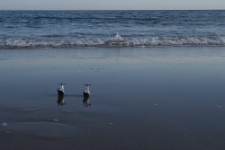 Taps on beach